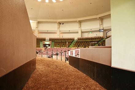 horseracegirl11-12