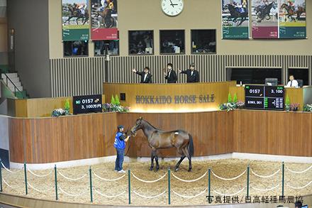 horseracegirl11-16