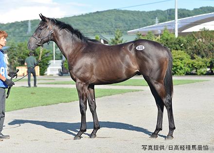 horseracegirl11-3