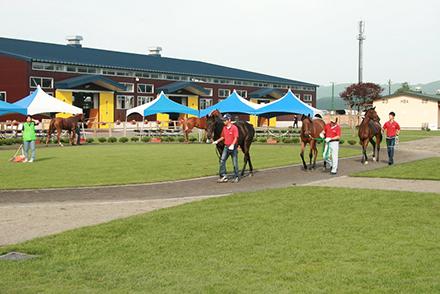 horseracegirl11-4