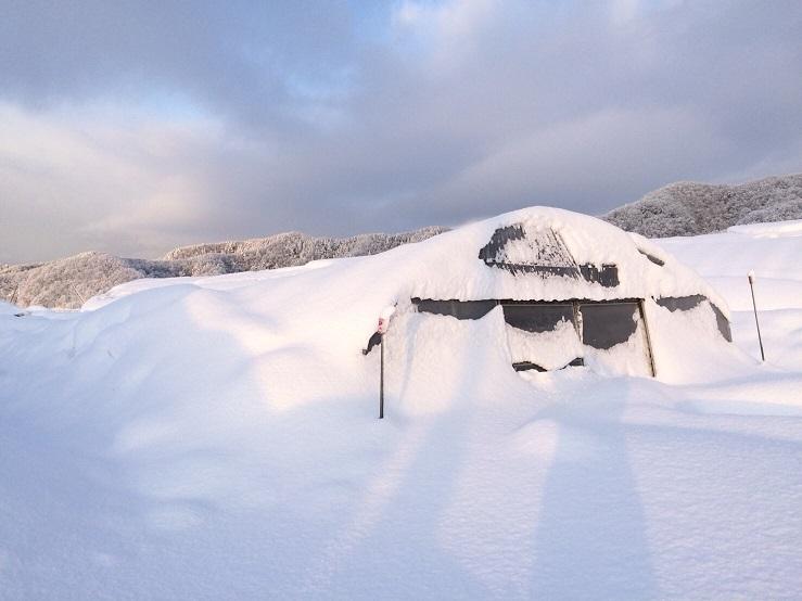 ハウス大雪