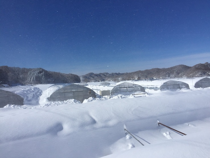 雪に埋もれたハウス