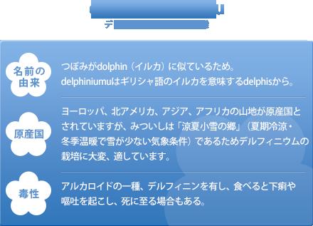 名前の由来:つぼみがdolphin(イルカ)に似ているため。delphiniumuはギリシャ語のイルカを意味するdelphisから。 原産国:ヨーロッパ、北アメリカ、アジア、アフリカの山地が原産国とされていますが、みついしは「涼夏小雪の郷」(夏期冷涼・冬季温暖で雪が少ない気象条件)であるためデルフィニウムの栽培に大変、適しています。 毒性:アルカロイドの一種、デルフィニンを有し、食べると下痢や嘔吐を起こし、死に至る場合もある。