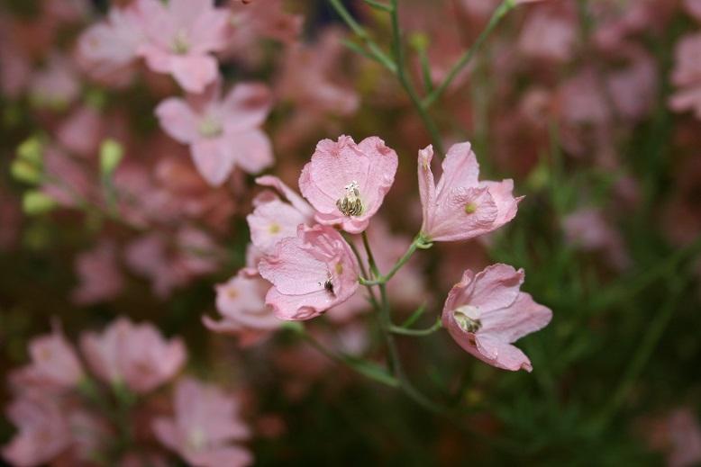 24.7.5 花卉品評会 014