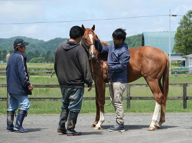 horsephotoinabab