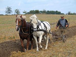 Farmer_plowing_in_Fahrenwalde,_Mecklenburg-Vorpommern,_Germany (1)