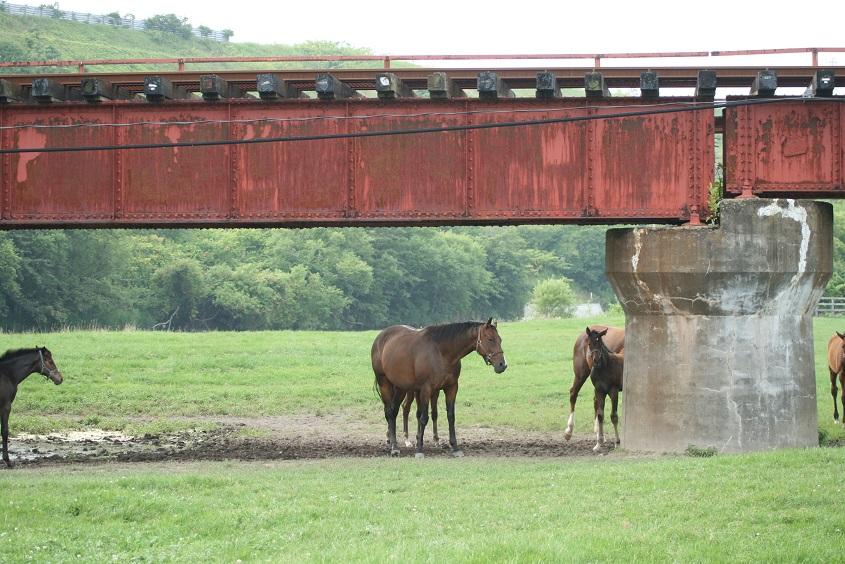 山際牧場線路下馬
