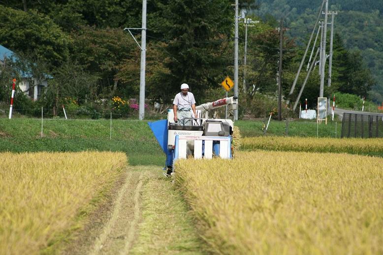 稲刈り開始1