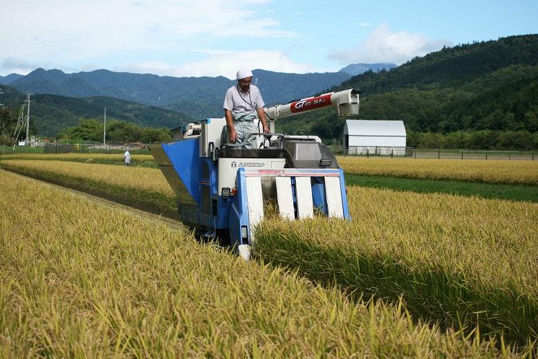 稲刈り開始2