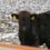 1月の素牛市場結果(三石牛抜粋)を更新しました!
